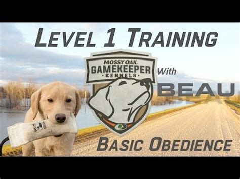 basic obedience basic obedience semi started