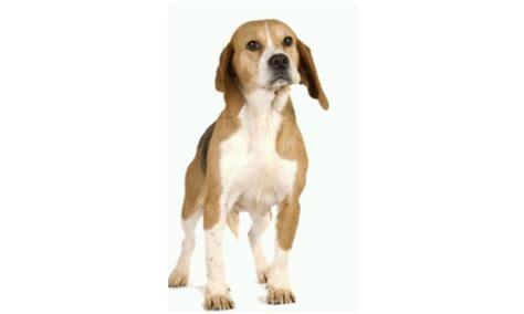perros todas clases perros todas las razas y fotos 1mobile com