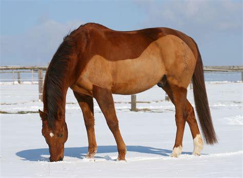 pferd eindecken ab wann fris 246 rbesuch tipps zum scheren zooroyal magazin