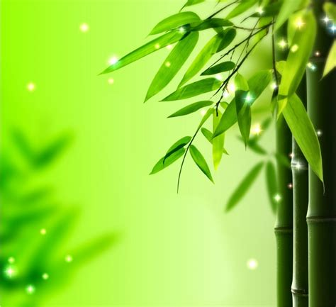 white lotus day spa point light green bamboo leaves background 9910