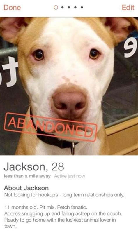 tinder for dogs brilliant shelter interns put adoptable dogs up for dates on tinder