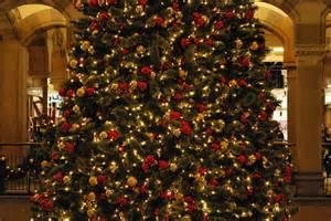 image gallery huge christmas trees
