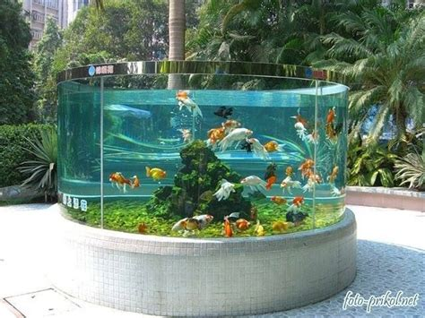 backyard aquarium outdoor goldfish tank i would love this if i lived in a