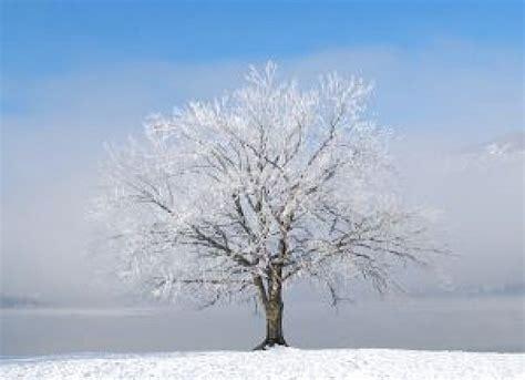 imagenes de arboles invierno dos 225 rboles de invierno descargar fotos gratis