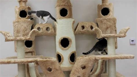 House Plans For Mansions by Buckingham Palace Cat Tree By Kitty Mansions Youtube