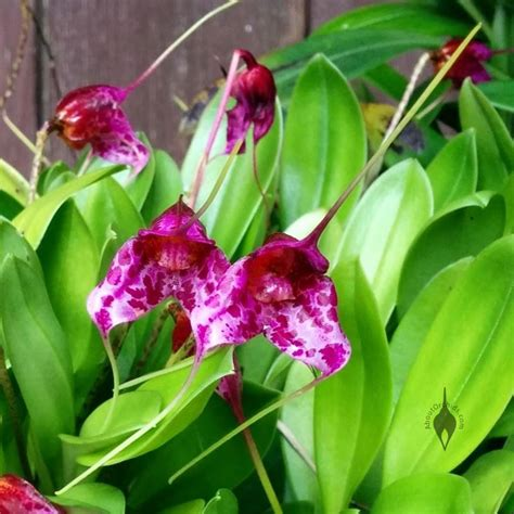 aboutorchids 187 blog archive 187 growing orchids outdoors in
