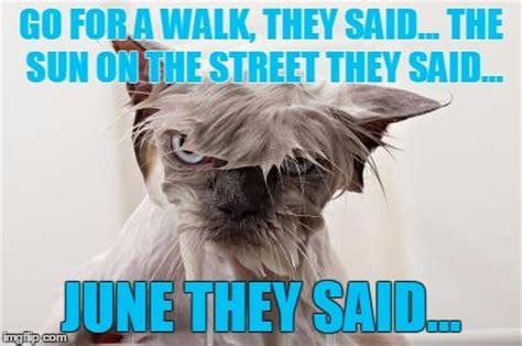 Angry Cat Meme Generator - 25 best ideas about cat meme generator on pinterest