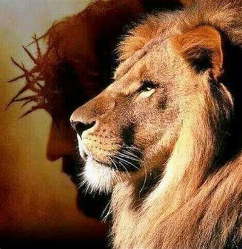 imagenes de guerreros en leones m 225 s de 25 ideas fant 225 sticas sobre le 243 n de jud 225 en
