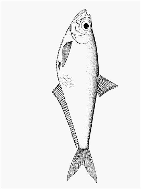 herring fish coloring page herring coloring pages download and print herring