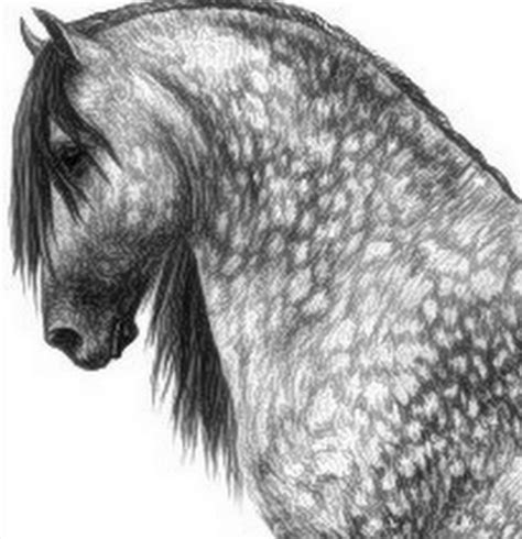 caballo a lapiz dibujos de animales cuadros modernos pinturas y dibujos cabezas de caballos