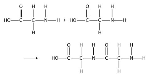carbohydrates polymer name polymers