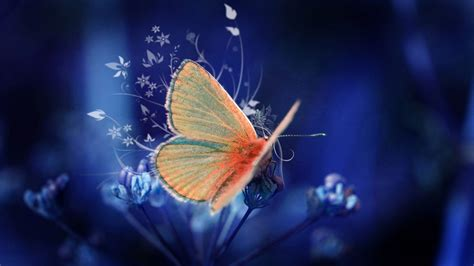 themes images hd free download awesome butterfly desktop wallpaper hd free download
