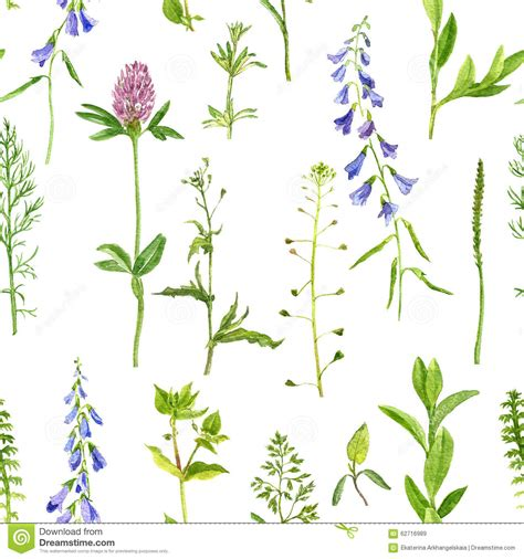 watercolor botanical pattern herbs botanical illustrations gallery