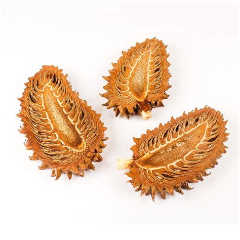 big pine cone slice woodzone