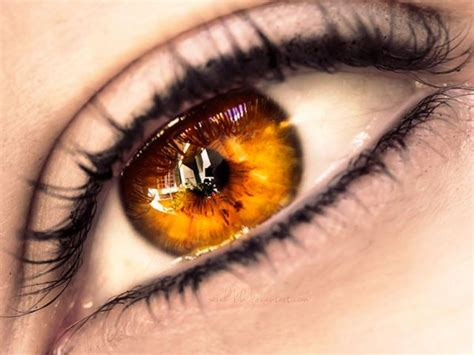 gold eye color 25 best ideas about golden on gold