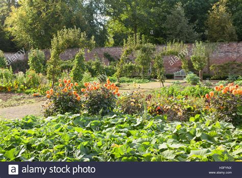 walled kitchen gardens walled kitchen garden at normanby country