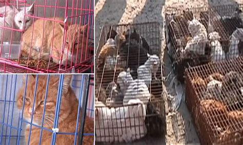 stolen pet cats     sold