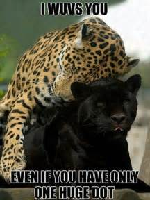 Jaguar Quotes Panther Animal Memes