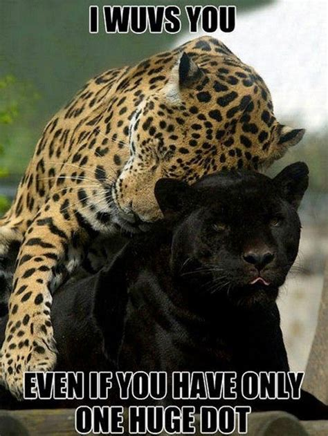 panther animal memes