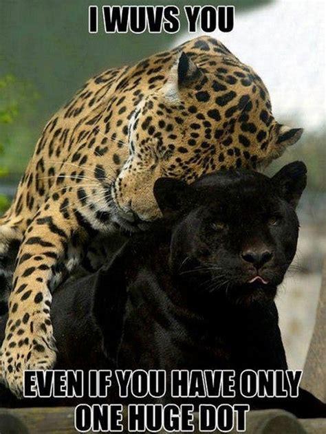 Jaguars Memes - panther animal memes