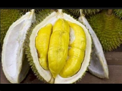duren  enak  serang makan durian part  youtube