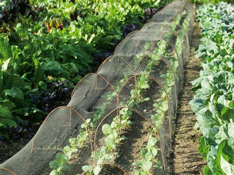 Garden Insect Netting by Growing Vegetables Cover Diy