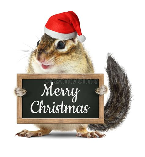 funny santa claus chipmunk hold blackboard  merry christmas stock photo image  banner