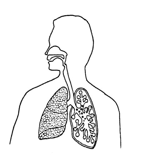 printable coloring pages respiratory system free coloring pages of the respiratory system