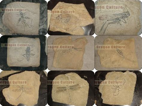 Fossil Replika Multired Shopper insect fossil replica from china manufacturer zigong city cultures arts co ltd