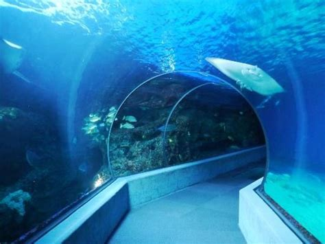 Senter Underwater center underwater tunnel you might also like hawaii planning tips and tricks http