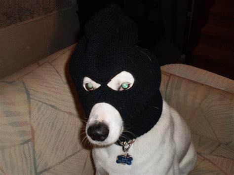 dogs robbing bank ski mask 171
