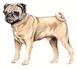 pug clip free free pug clipart free clipart graphics images and photos domain clipart