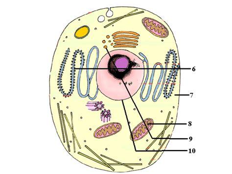 cell structure diagram quiz cell structure and function quiz tristanerdmann s