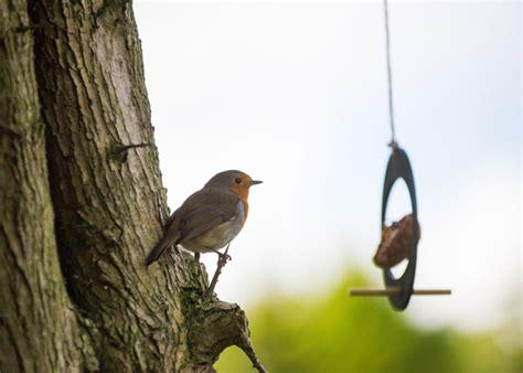 buy eco apple bird feeder