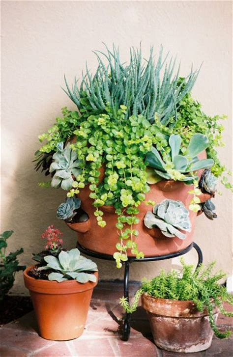 succulent containers for sale 19 best images about garden planter ideas on pinterest
