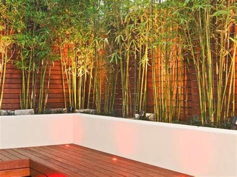 Planters For Bamboo by Sculpture Concrete Planters And
