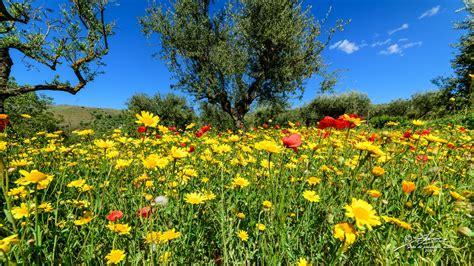 primavera in fiore primavera in fiore salvatoresisca 2030630