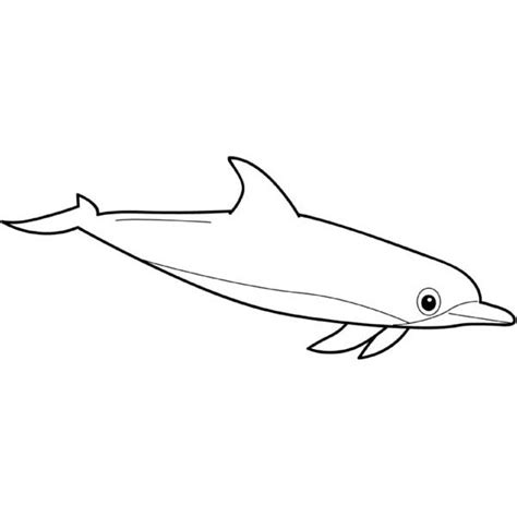 bottlenose dolphins coloring pages