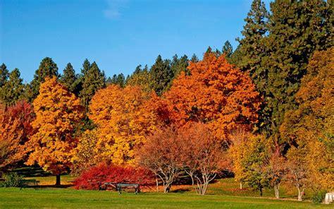 the autumn of the autumn trees wallpaper 1440x900 29076