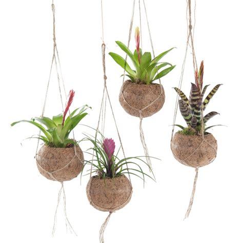 xenos hangplant hangplantjes voor binnen diy leuk om zelf te maken