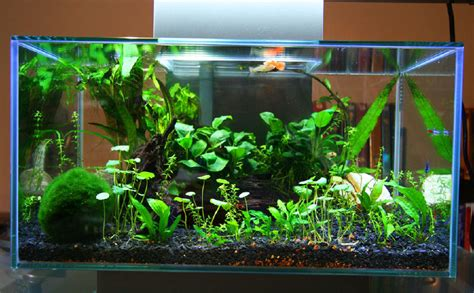 fluval edge aquascape fluval edge 12 gallon google search aquascapes