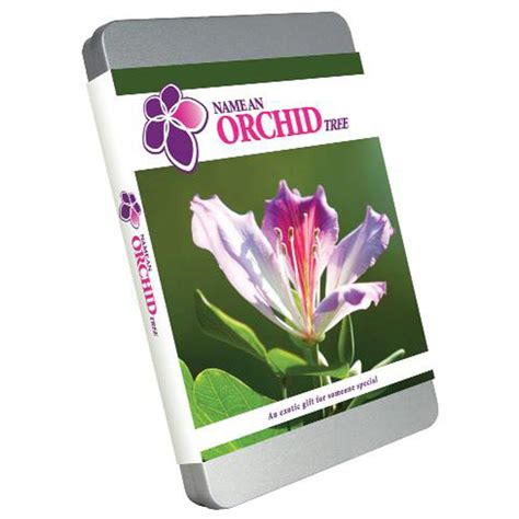 gift tin dollar tree name an orchid tree unique gift tin iwoot