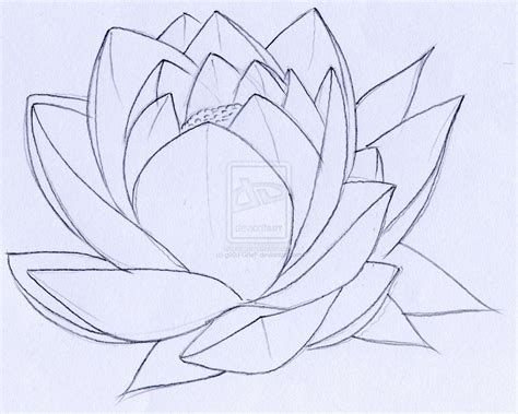 flower tattoo outline designs outline lotus flower design