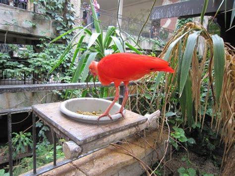 butterfly garden niagara falls niagara falls tourism