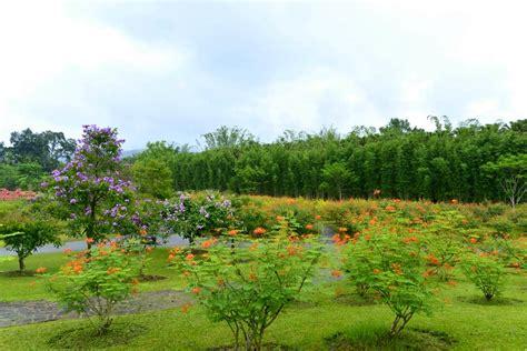 Xishuangbanna Tropical Botanical Garden Xishuangbanna Tropical Botanical Garden In Early Summer Xishuangbanna Tropical Botanical