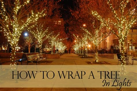 how many of lights to wrap a tree how to wrap a tree with lights