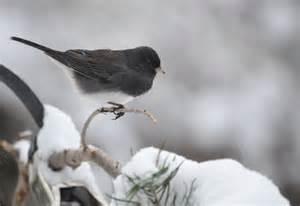 the garden is set for winter birds garden walk garden talk