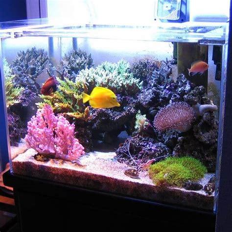 aquarium air laut berikut  faktanya yuk kita simak