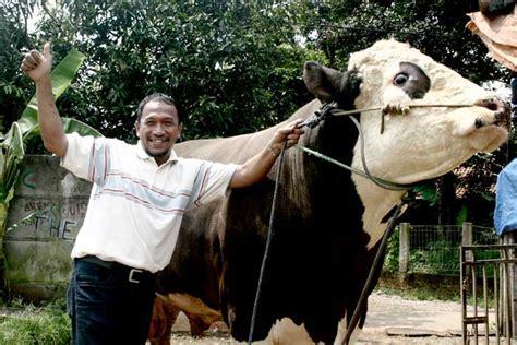 Daftar Bibit Sapi Limosin sapi limosin besar safari ternak jual hewan qurban