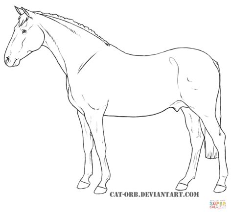 realistic arabian horse coloring coloring pages